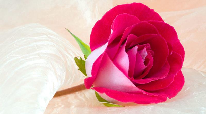 Госпожа Аиша: Острый ум и благочестие