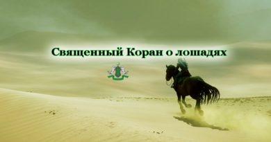 Священный Коран о лошадях