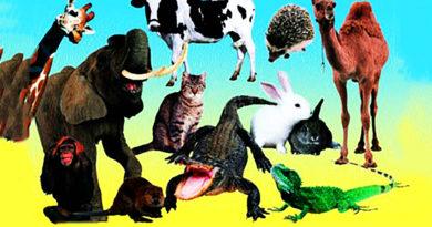 Животные, мясо которых можно есть