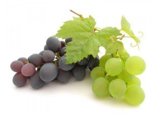 vinograd_