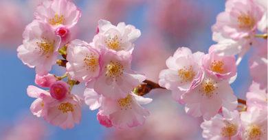 8 наставлений Пророка Мухаммада (ﷺ) о детях