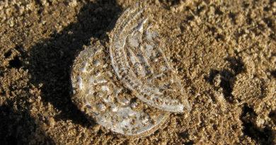 В Дагестане обнаружена уникальная арабская монета