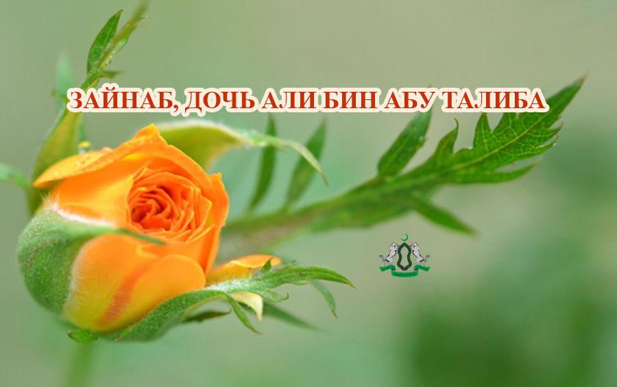 Зайнаб, дочь Али бин Абу Талиба