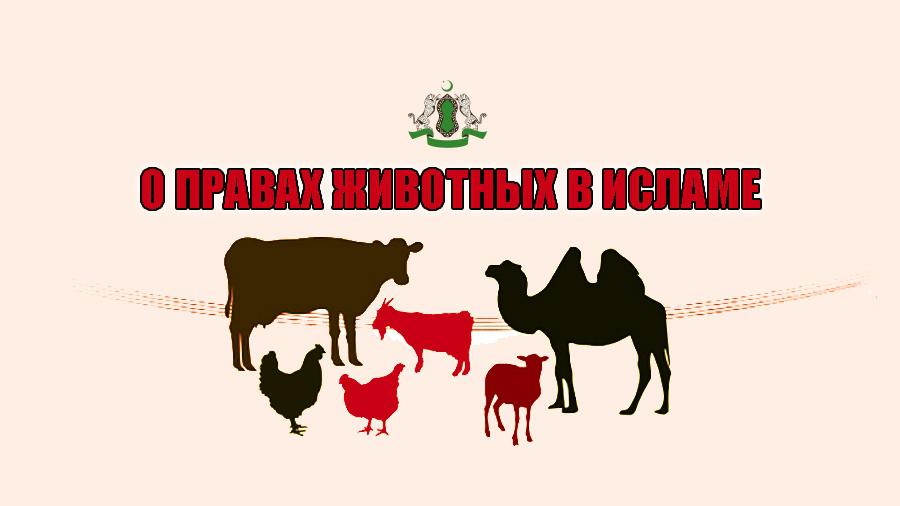 О правах животных в Исламе