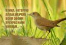 Птица, которую Аллах научил всем Своим прекрасным именам...